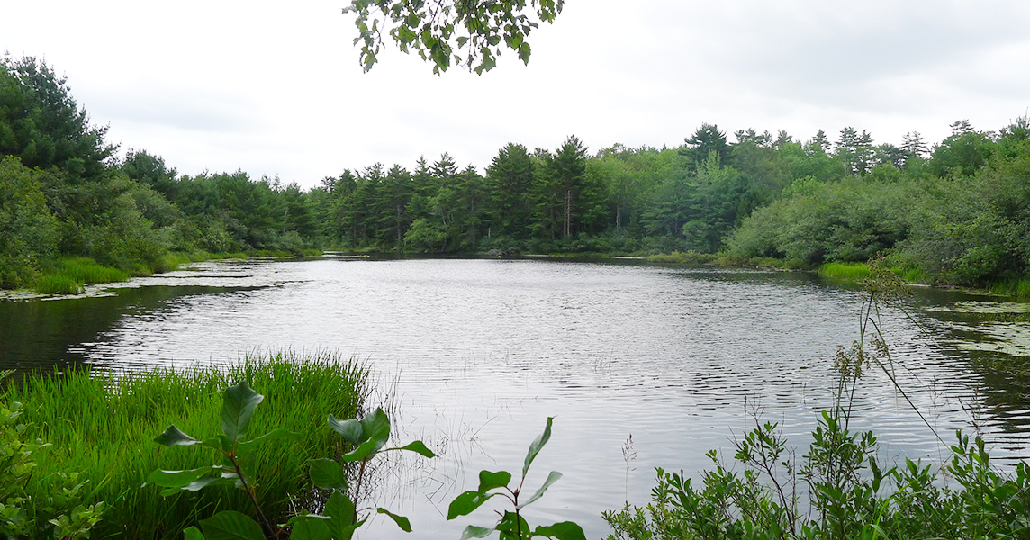 Private Islands for sale - Forest Land by Medway River