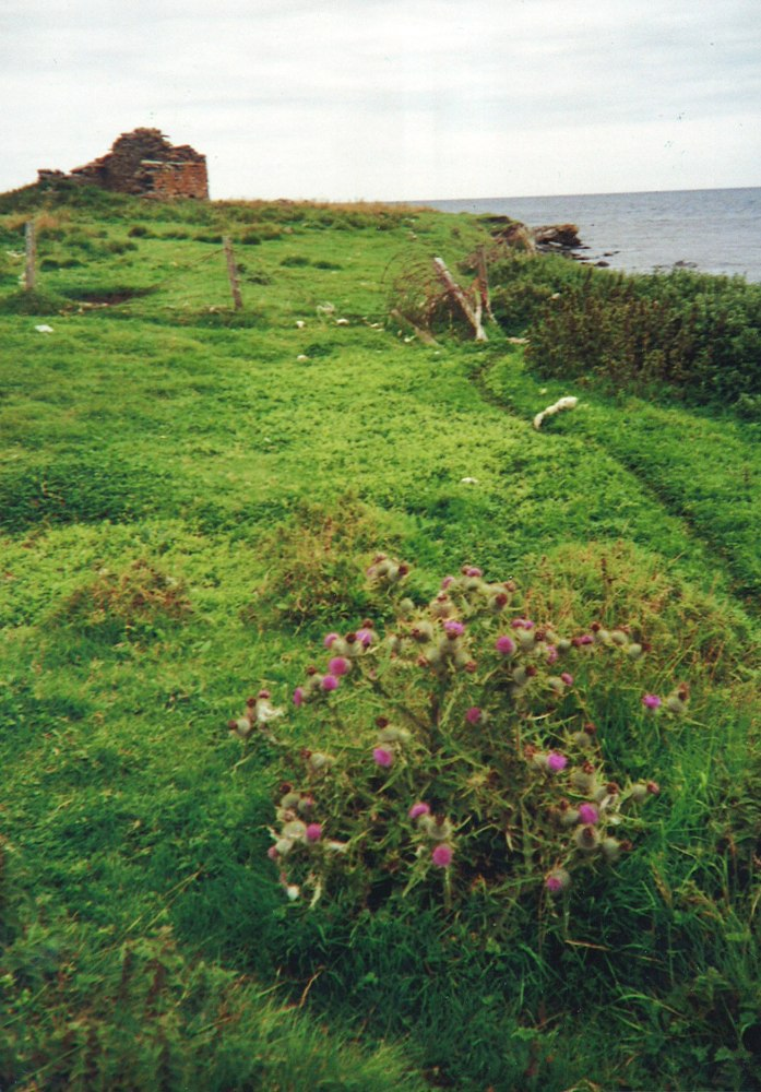 Land For Sale Orkney Islands