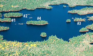 Sheep Lake Islands